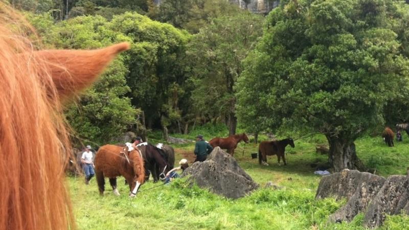 Hairy Feet Waitomo during Filming: Dwarf Ponies