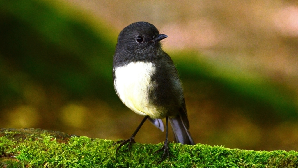 Lord of the Rings Tour from Queenstown: South Island Robin